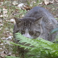Photos: 他所猫さん