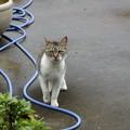 Photos: 猫のお客さん