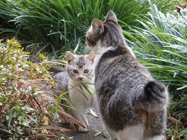 ユキちゃんと仔猫さん