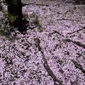 写真: 風のいたずら(春)