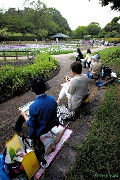 馬見丘陵公園_菖蒲(4)