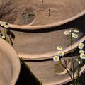 Photos: ナガレ山古墳の円筒埴輪