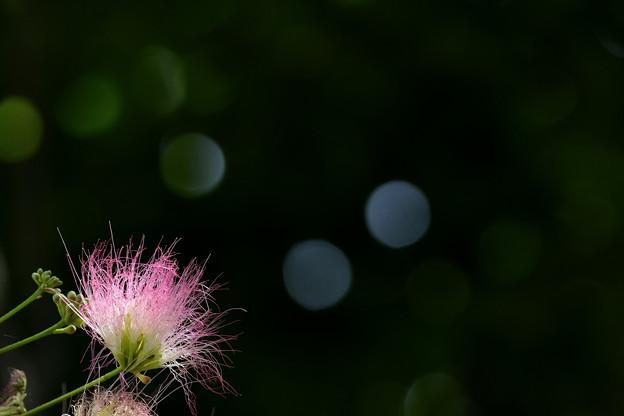 写真: ねむの木