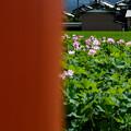 藤原宮:柱間の蓮花