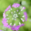 写真: 華環(はなたまき)
