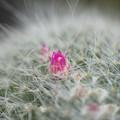 写真: 一輪だけ開花