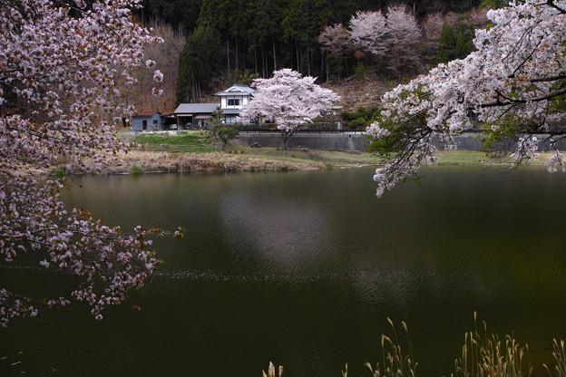 津風呂湖の春