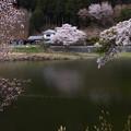 写真: 津風呂湖の春