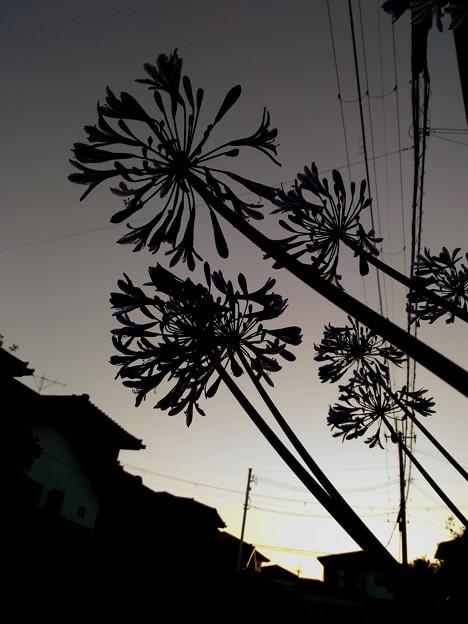 写真: 梅雨晴れ一刻
