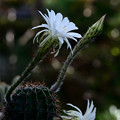 写真: 花盛丸:今季4度目の花