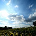 写真: ヒマワリ丘のカメラマン