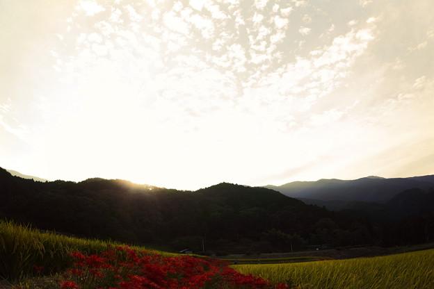 写真: 葛城山麓:彼岸花黄昏