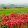 Photos: 明日香秋雨模様(2)