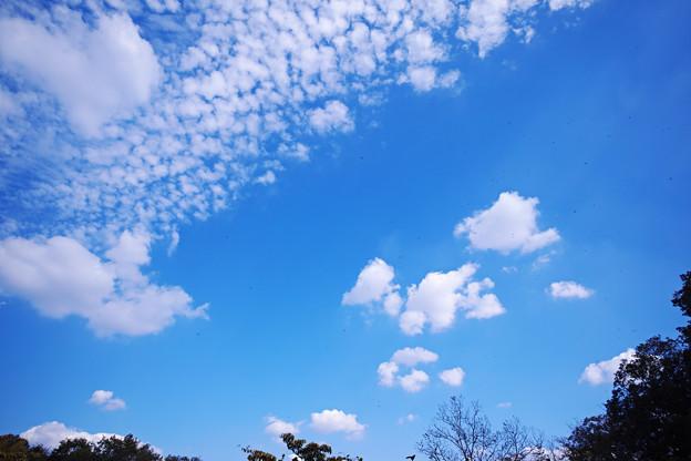青空にアカトンボ