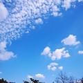 Photos: 青空にアカトンボ