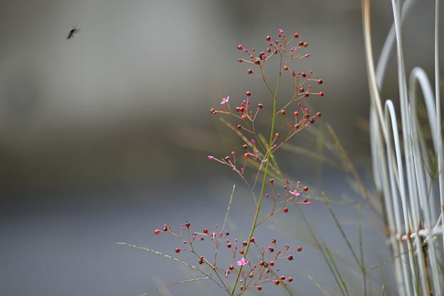写真: 三時草