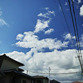 雲のプードル親子