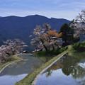 Photos: 三多気の桜