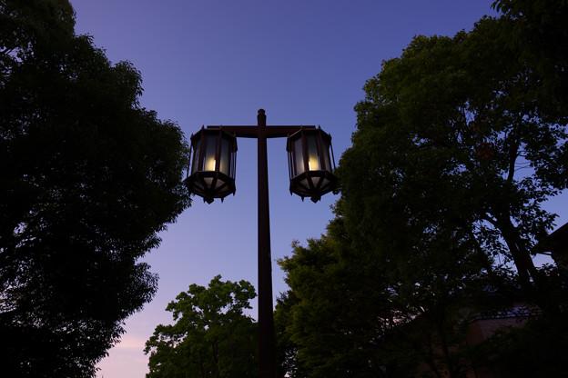 緑陰と夕暮とランプ