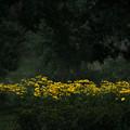 緑陰の黄色いジニア