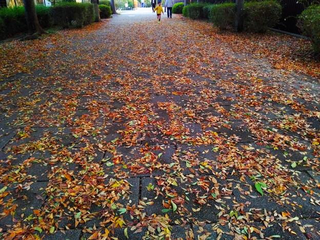 枯葉散歩・・・楽しいな~