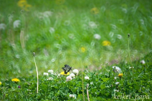 春うらら~アゲハチョウのいる風景