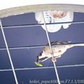Photos: スズメ:お宿は街路灯の傘の中!