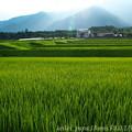 Photos: 湖西夕景(2)