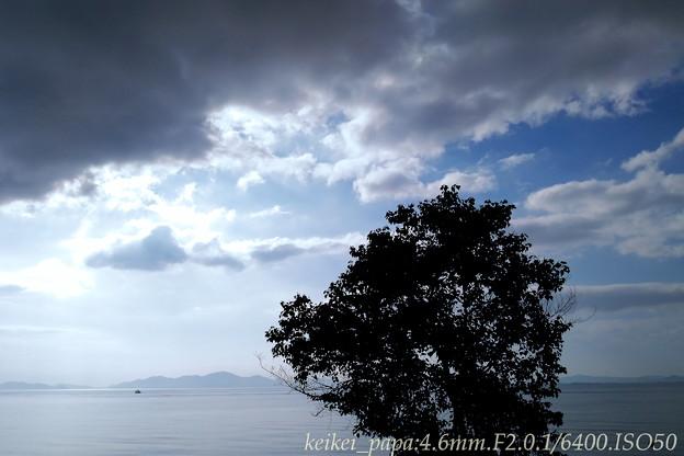 Photos: 琵琶湖:浜の木一本(スマホ撮り)