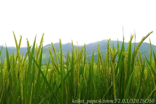Photos: 湖西の梅雨明け(スマホ撮り)