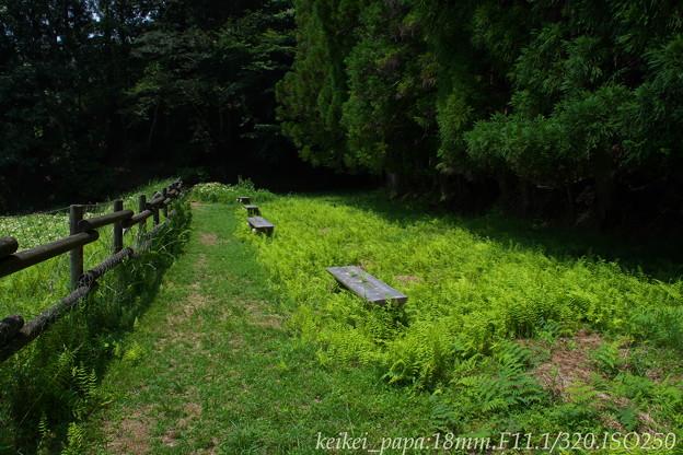御杖村:岡田の谷の半夏生(1)