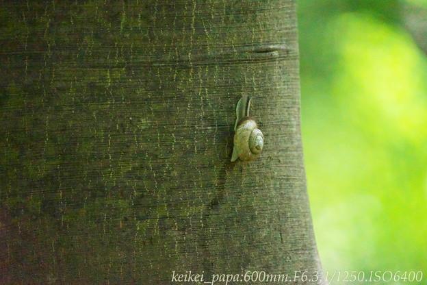 真夏のカタツムリ