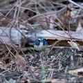 Photos: クロウリハムシを捕まえた!