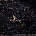 Photos: トラツグミにスポットライトが!