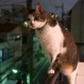 Photos: 夜猫
