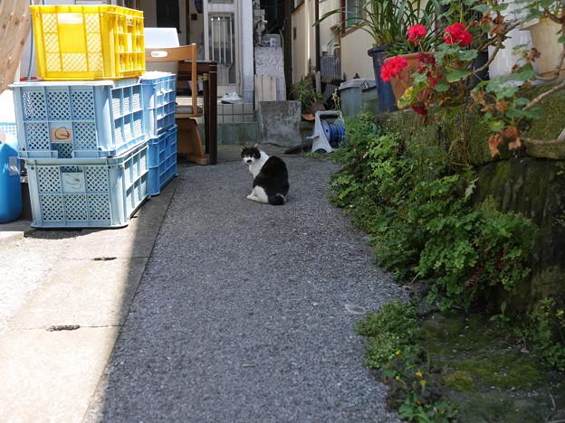 三崎港の猫