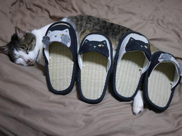 写真: お見舞いの猫スリッパ!