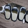 お見舞いの猫スリッパ!