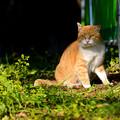 夢の島の猫