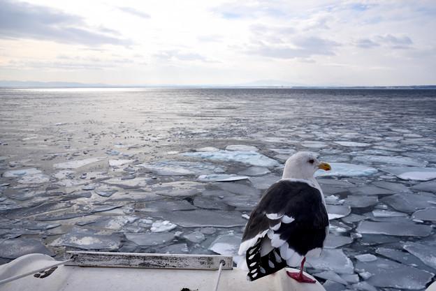 流氷が去った網走の海