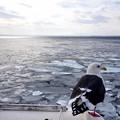 Photos: 流氷が去った網走の海