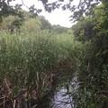 Photos: 品川区の大井ふ頭に有る自然池