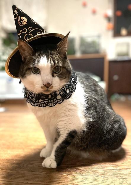 iphone12preで撮った我が家の猫1