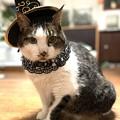 Photos: iphone12preで撮った我が家の猫1