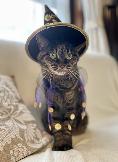 iphone12proで撮った我が家の猫2