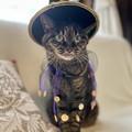 Photos: iphone12proで撮った我が家の猫2