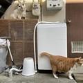 Photos: 猫2匹と洗濯機