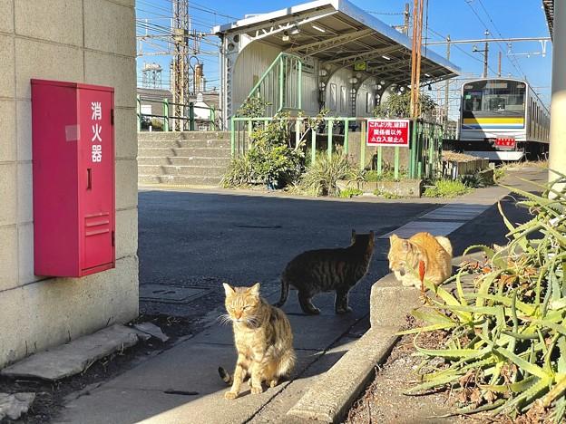 扇町駅のニャン達