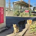 Photos: 扇町駅のニャン達