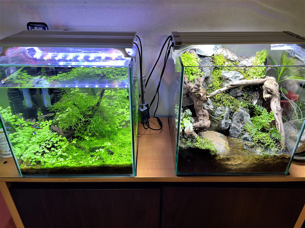 Photos: 水草水槽とテラリウム